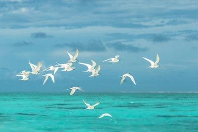 pexels asad photo maldives